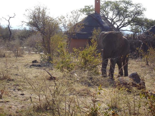 No solo las riquezas minerales de África están sujetas a abuso, también su vida silvestre. Por la sed de marfil los elefantes se matan en todo el continente, incluso en parques nacionales. Crédito: Nalisha Adams/IPS