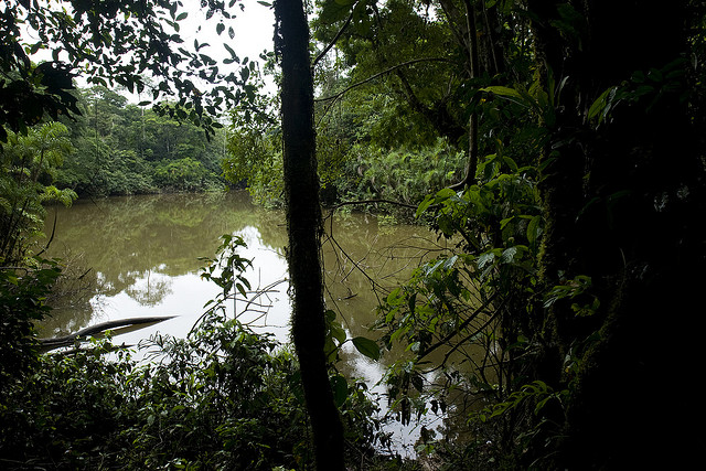 El ecosistema del Parque Yasuní y sus pueblos indígenas están en peligro, denuncian ambientalistas. Crédito: Iniciativa Yasuní-ITT