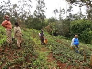 Agricultoras de la aldea de Nshi-o-doh en Ndu, en la Región del Noroeste de Camerún. Crédito: Monde Kingsley Nfor/IPS