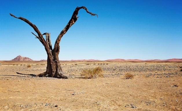 Dos mil millones de hectáreas de tierra están muy degradadas en el mundo como consecuencia de la desertificación. Crédito: Bigstock/IPS