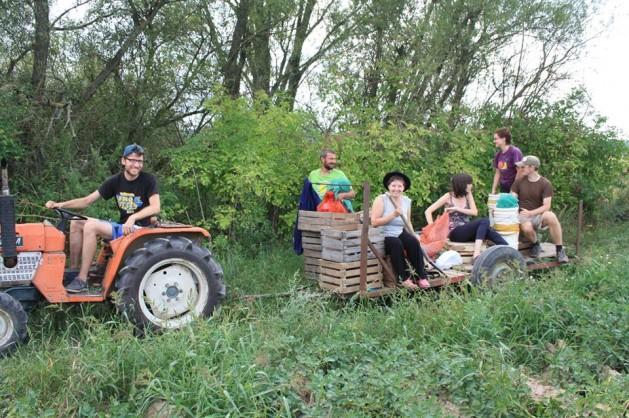 Agricultor orgánico Slawek Dobrodziej con voluntarios de Varsovia trabajando en su granja. Crédito: Cortesía de. Malgosia Dobrodziej