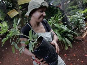Una trabajadora de la Cooperativa Vivero Alamar, traslada posturas de plantas ornamentales en un suburbio de La Habana. El acceso al empleo es un problema para las mujeres rurales cubanas. Crédito: Jorge Luis Baños/IPS