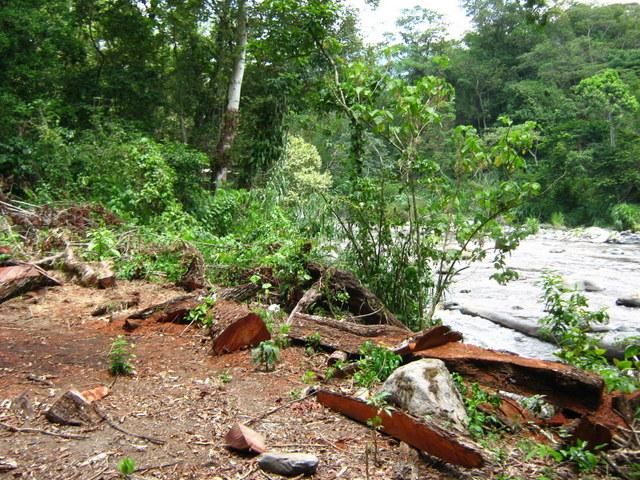 Árboles talados en la ribera del río Blanco por una generadora energética. Proyectos hidroeléctricos amenazan la biodiversidad y las formas de vida de las comunidades del estado de Veracruz, en el sureste de México. Crédito: Cortesía del Comité de Defensa Libre
