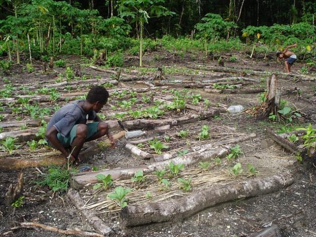 La degradación del suelo, el cambio climático, las fuertes lluvias del monzón tropical y las plagas son algunos de los problemas que padecen los agricultores de todo el mundo. Crédito: Catherine Wilson/IPS