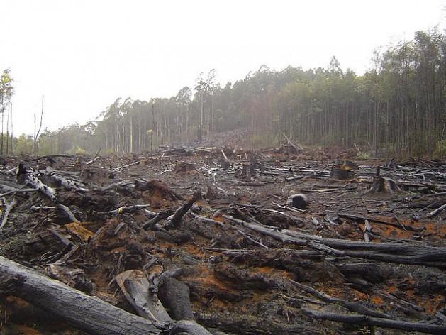 Canadá encabeza la lista de países con mayor deforestación desde 2000, con 21 por ciento del total de cubierta vegetal perdida. Crédito: Crustmania/ CC by 2.0