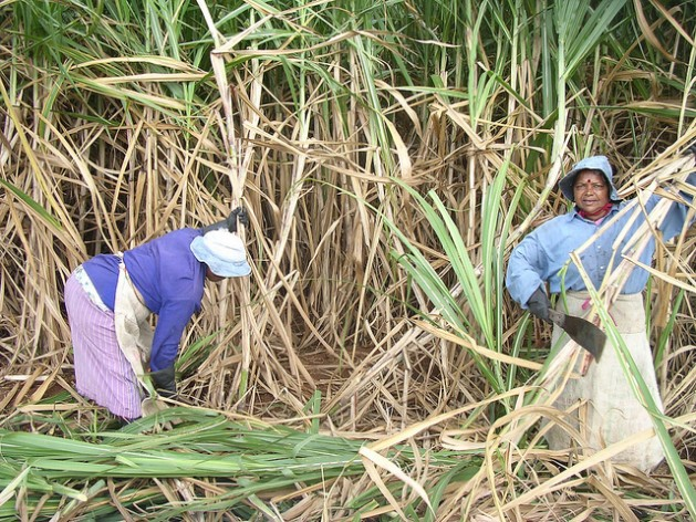 Agricultoras de Mauricio cosechando caña de azúcar. Crédito: Nasseem Ackbarally/IPS