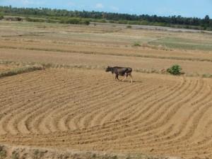 Campo reseco en el norte del distrito de Jaffna, Sri Lanka. Crédito: Kanya D'Almeida/IPS