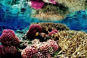 Ecosistema de arrecifes de coral en el Refugio Nacional de Vida Silvestre del Atolón de Palmyra. Crédito: Jim Maragos /U.S. Fish and Wildlife Service