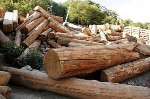 Incautación de madera talada de forma ilegal en la localidad de Ayun, en el distrito pakistaní de Chitral. Crédito: Imran Schah/IPS