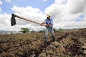 Un agricultor de la localidad hondureña de Alauca siembra maíz en su terreno. La agricultura compone hasta el 20% del PIB en algunos países y el cambio climático puede tener efectos nocivos sobre esta. Crédito: Neil Palmer/Ciat