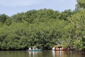 Guadaparques del Ministerio del Medio Ambiente recorren uno de los canales que se abre paso entre el bosque de mangle del humedal de Barra de Santiago, en la costa del departamento de Ahuachapán, en el occidente de El Salvador. Crédito: Edgardo Ayala/IPS