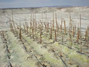 La técnica de descontaminación consiste en la utilización de sistemas biológicos que actúan como digestores para contrarrestar los efectos contaminantes de la minería. Crédito: Cortesía de la Universidad de Santiago