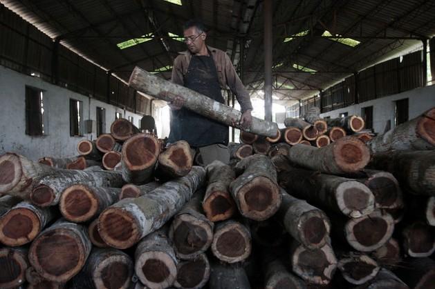 Un carpintero acomoda una carga de caoba, madera valiosa incautada por las autoridades de Cuba en el ecosistema pantanoso de la Ciénaga de Zapata. Crédito: Jorge Luis Baños/IPS