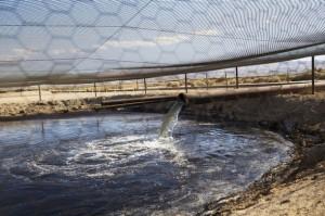Fluido de fractura hidráulica y otros residuos de perforaciones se vierten en un pozo sin recubrir junto a la Carretera del Petróleo, en el estadounidense condado de Kern, California. Crédito: Sarah Craig/Faces of Fracking