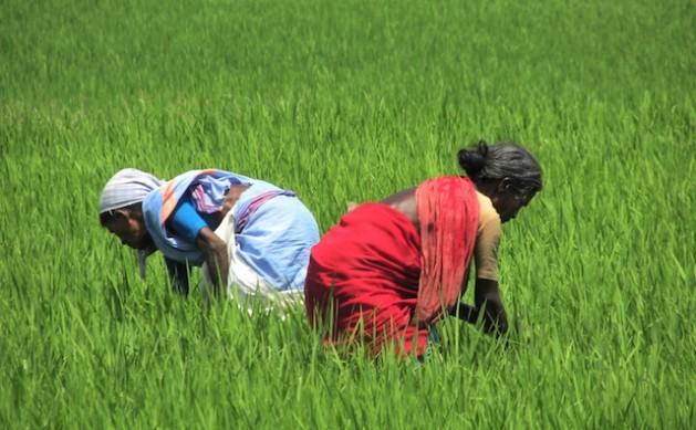 Los agricultores de Tamil Nadu usan biofertilizantes para revivir las tierras afectadas por los depósitos de sal tras el tsunami asiático de 2004. Crédito: Jency Samuel/IPS