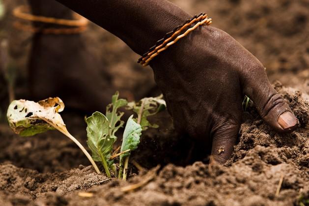 Los suelos saludables son fundamentales para la producción mundial de alimentos y ofrecen una gama de servicios ambientales. Foto: FAO / Olivier Asselin