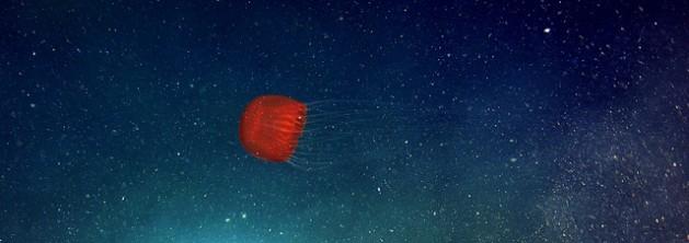 Como un fantasma en la noche esta medusa se desplaza cerca del fondo marino del cañón de Barkley, frente a la costa occidental de Canadá, a una profundidad de 892 metros. Crédito: CSSF/NEPTUNE Canadá/cc by 2.0