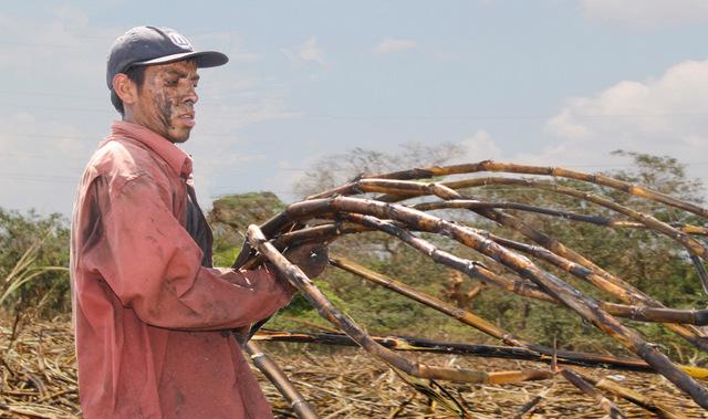 """El cortador de caña Evaristo Pérez, de 22 años, en la finca La Isla, en el occidental municipio de San Juan Opico, en El Salvador. Él fue uno de los niños temporeros en los cañaverales, de donde casi desaparecieron gracias a un compromiso de """"cero tolerancia"""" al trabajo infantil en la agroindustria azucarera. Crédito: Edgardo Ayala/IPS"""