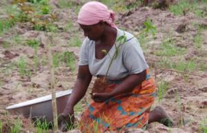 Una mujer planta un árbol de karité en Ghana para proteger los márgenes del río y para mejorar su economía. Queda mucho por hacer para superar las dificultades que atraviesa la población femenina, en especial en áreas rurales, en términos de movilidad y participación política. Crédito: ©IFAD/Dela Sipitey