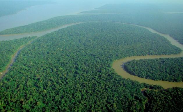 "El futuro de la Amazonia ""pende de un hilo"". Crédito: lubasi (Catedral Verde - Floresta Amazonica)/CC BY-SA 2.0"