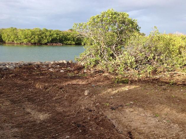 Manglares talados en la isla Guiana, de Antigua, para dar paso a la construcción de una carretera. Crédito: Desmond Brown/IPS