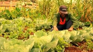 David Njeru, agricultor del centro de Kenia, revisa sus coles. Su comunidad corre el riesgo de ser desplazada por poderosos promotores inmobiliarios. Crédito: Miriam Gathigah/IPS