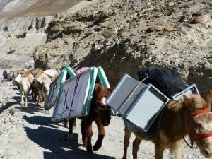 Un sistema de energía solar es transportado por mulas a una región remota en la región desértica de Ladaj, en la cordillera del Himalaya. Crédito: Athar Parvaiz/IPS