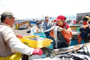 La pesca artesanal, que por años fue sustento económico y alimenticio de millones de familias sudamericanas, enfrenta múltiples amenazas, como las que deben sortear estos pescadores del pueblo de Duao, en la costa del sur de Chile, que sobreviven con la venta de su captura diaria en mercados improvisados en la propia playa. Crédito: Marianela Jarroud /IPS