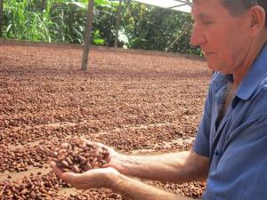 Darcicio Wronski muestra las almendras de cacao secado al sol en el patio de su casa, con la que se elabora la manteca de chocolate. Su familia es una de las 120 agrupadas en seis cooperativas que elaboran cacao orgánico en el entorno de Medicilândia y Altamira, en el estado amazónico de Pará, en Brasil. Crédito: Mario Osava/IPS