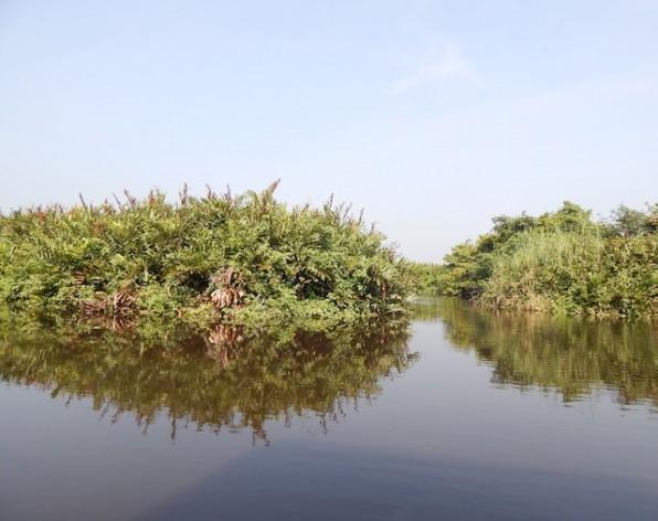 Los bosques de manglares, como este de Sri Lanka, pueden almacenar hasta 1.000 toneladas de carbono por hectárea en su biomasa. Sin embargo, son talados de tres a cinco veces más que los demás bosques. Crédito: Kanya D'Almeida/IPS