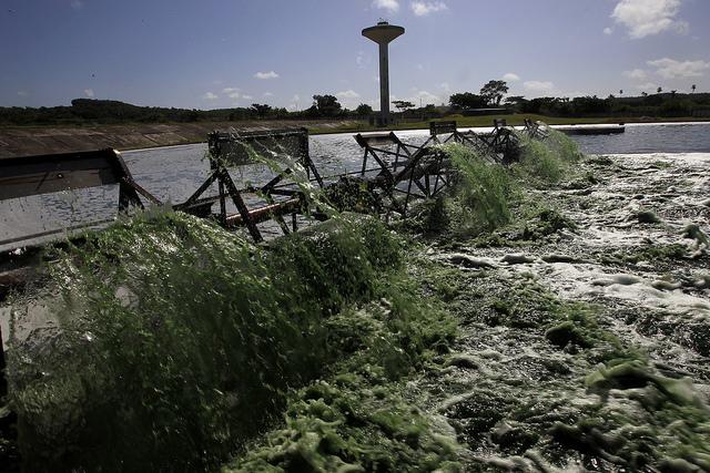Área de secado de la planta producción del suplemento alimenticio de espirulina en la localidad de Jaruco, en el municipio de San José de las Lajas, en Cuba. Crédito: Jorge Luis Baños/IPS
