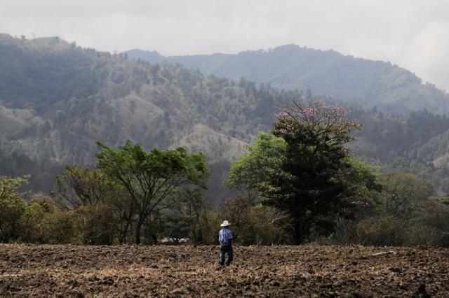 Un agricultor hondureño camina por su pequeña finca. La agricultura familiar da sustento a dos terceras partes de las familias rurales en América Central. Crédito: Neil Palmer / CIAT