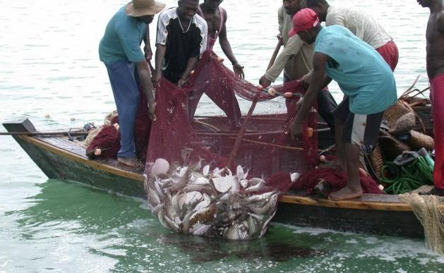 Estudios muestran que las especies locales de peces en Uganda, capturadas en el lago Victoria, se reducen por el aumento de temperatura debido al cambio climático. Crédito: Wambi Michael/IPS.