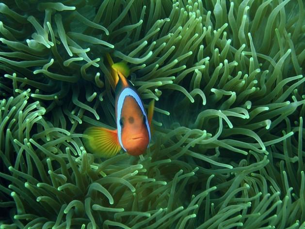 Un estudio de la ONU asegura que los océanos del mundo se encuentran en dificultades. Crédito: Shek Graham / CC-BY-2.0