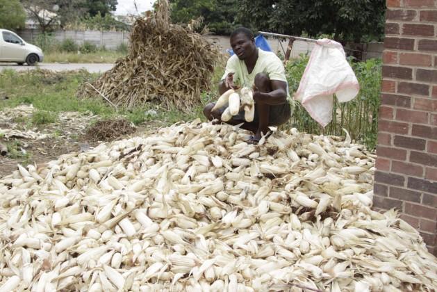 La agricultura urbana prolifera en África a medida que la inseguridad alimentaria golpea tanto a la población rural como a la urbana. Crédito: Jeffrey Moyo/IPS