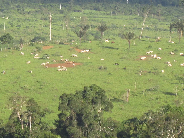 Los pastizales sustituyeron a los bosques amazónicos en Brasil Novo, un municipio de la cuenca del río Xingú, donde se construye la gigantesca central hidroeléctrica de Belo Monte. La ganadería de baja productividad, con uno a dos animales por hectárea, es el gran factor de la deforestación y la degradación del suelo en la región y la meta del gobierno es recuperar solo un cuarto del área degradada por esta actividad. Crédito: Mario Osava/IPS