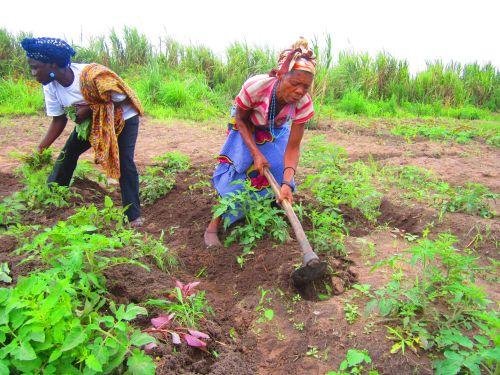 Mujeres trabajando en sus huertos en el Polo Agroindustrial de Capanda, Angola. Crédito: Mario Osava/IPS