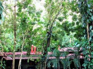 Parte de la reserva privada de Punta Leona, en la costa pacífica del oeste de Costa Rica, donde en forma voluntaria sus propietarios protegen la biodiversidad biológica y explotan una pequeña parte para el ecoturismo. Crédito: Fabíola Ortiz/IPS