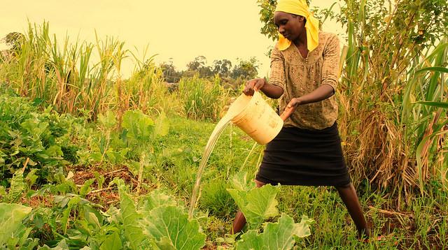 Mary Wanja, campesina de Ngangarithi, en Kenia, riega sus cultivos con agua de los humedales. Según la FAO, el rostro de la agricultura es esencialmente femenino, al representar 45 por ciento de la fuerza laboral del sector en los países en desarrollo. Crédito: Miriam Gathigah/IPS