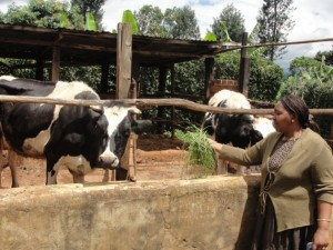 El ganado bovino concentra el mayor volumen de emisiones de metano de las actividades pecuarias. Crédito: Miriam Gathigah/IPS.