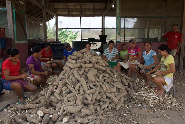 Algunos socios y socias de la cooperativa São Raimundo do Fe em Deus, en el municipio rural de Belterra, en la Amazonia brasileña, pelan yuca para preparar harina del tubérculo. Las asociaciones de los pequeños agricultores les ayudan a defenderse de los efectos negativos de la expansión del cultivo de la soja en esta región a orillas del río Tapajós. Crédito: Fabiana Frayssinet/IPS