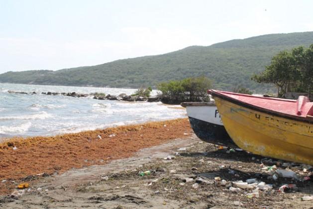 Playas erosionadas y plagadas de algas Sargassum muertas forman parte del paisaje común en la bahía de Hellshire, en Jamaica. Los científicos atribuyen el fenómeno al cambio climático. Crédito: Zadie Neufville/IPS.