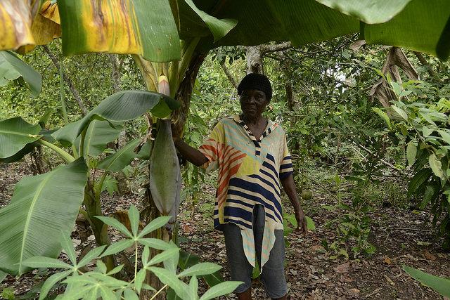 """Cecilia Joseph es una pequeña productora de Mata Mamón, desde que cruzó la frontera con Haití """"cuando era muchacha"""". Crédito: Dionny Matos."""