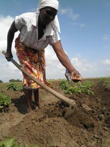 Los agricultores sufrirán la mengua del apoyo que reciben para capacitación y para promover la agricultura climáticamente inteligente por los recortes que sufrirá la partida salarial para los funcionarios que les ofrecen asistencia técnica en Zimbabwe. Crédito: Busani Bafana/IPS.