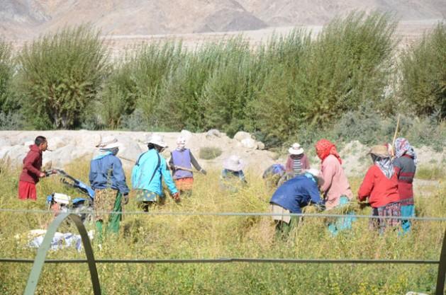 Mujeres trabajando en el campo en India. Crédito: Neeta Lal/IPS