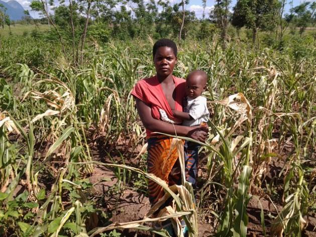 Mwandida Mojolo tiene cuatro hijos. En la fotografía está parada frente a su maizal, que sufrió los efectos del fenómeno de El Niño/Oscilacion del Sur. Crédito: Charity Phiri/IPS.