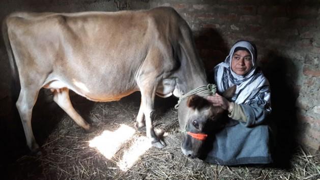 La productora lechera Maryam Yusuf pasa la mayor parte de su tiempo cuidando a sus tres vacas para mantener a su familia. Aliya Bashir/IPS