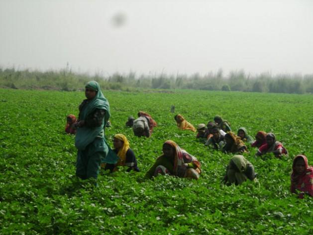 Las campesinas de Bangladesh prefieren cultivos resistentes a las variaciones climáticas. Crédito: Naimul Haq/IPS.