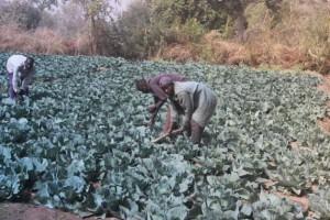La región de Extremo Norte, en Camerún, atraviesa una grave inseguridad alimentaria, profundizada por los ataques de Boko Haram. Crédito: Mbom SixtusIPS.