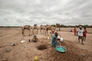 En Somalilandia y el estado somalí de Puntland, casi dos millones de personas sufren el impacto de la sequía en el marco del fenómeno de El Niño. Somalia pertenece a la Liga Árabe. Crédito: PMA/Petterik Wiggers.